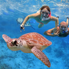 Excited snorkelers cutting the azure ocean surface and following a curious turtle
