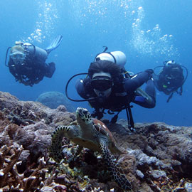 A group of scuba enjoying their day diving trips in Bali while looking at the turtle in a current