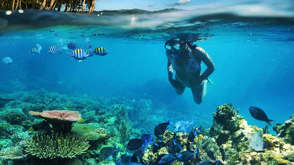 pretty girl snorkelling just above the stunning coral reef entertained by a school of sergeant fish