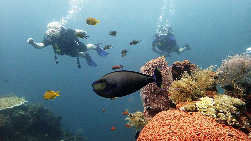 scuba divers following a fish on a coral reef, trying to hide in an anemone